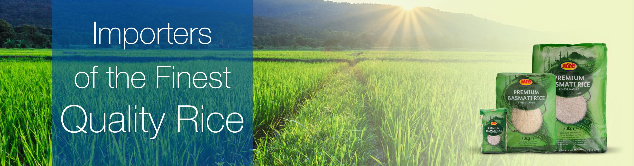 paddy-field-blue